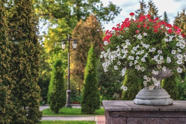 Blumenbeete mit weißen und roten petunien im freien und tageslicht
