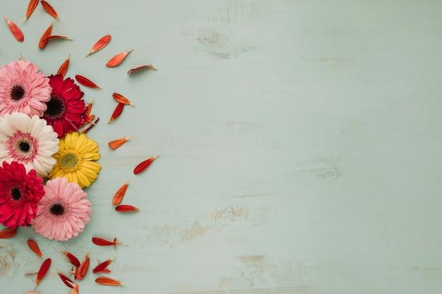 Blumenblätter in der nähe von hellen gerbera