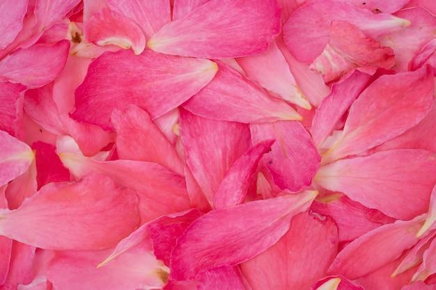 Blumenblattdetail von stieg für hintergrund