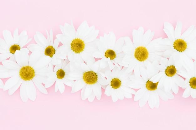 Blumendekoration der draufsicht auf rosa hintergrund