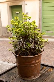 Blumendekoration des europäischen hauses, blick von der straße. straßendekoration.