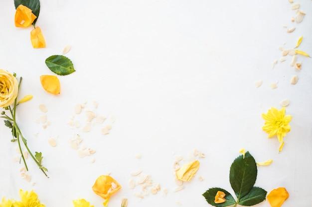 Blumendesign. weißer hintergrund. negatives raumkonzept. blumen und blütenblätter rahmen