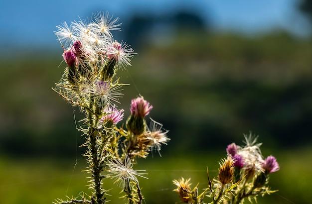 Blumendetail mit sonnenstrahlen und spinnweben.