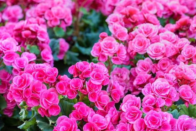Blumenfeld mit sonnenaufgang