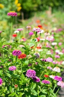 Blumenfeldhintergrund im frühjahr