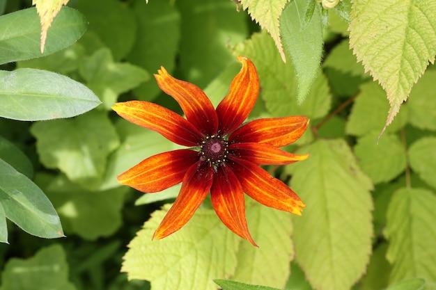 Blumengarten gerberagänseblümchen-frühlingssommer