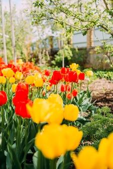 Blumengarten mit roten und gelben tulpen