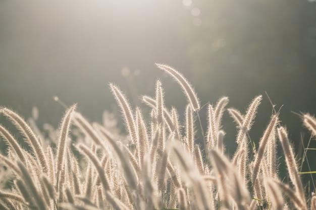 Blumengras gegen sonnenlicht