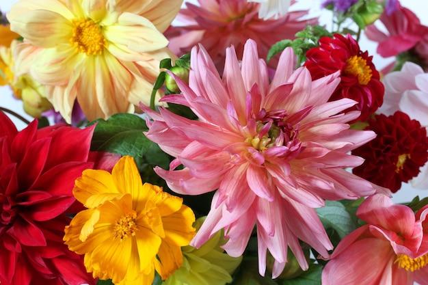 Blumenhintergrund, blumenstraußnahaufnahme, selektiver fokus. dahlien im garten.