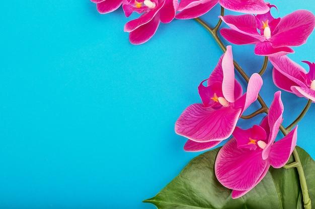 Blumenhintergrund der tropischen rosa orchideen mit grünen tropischen blättern auf blauem hintergrund. speicherplatz kopieren