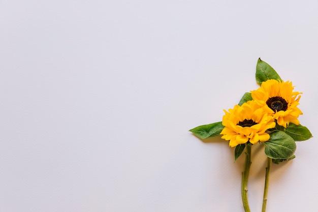 Blumenhintergrund mit sonnenblumen