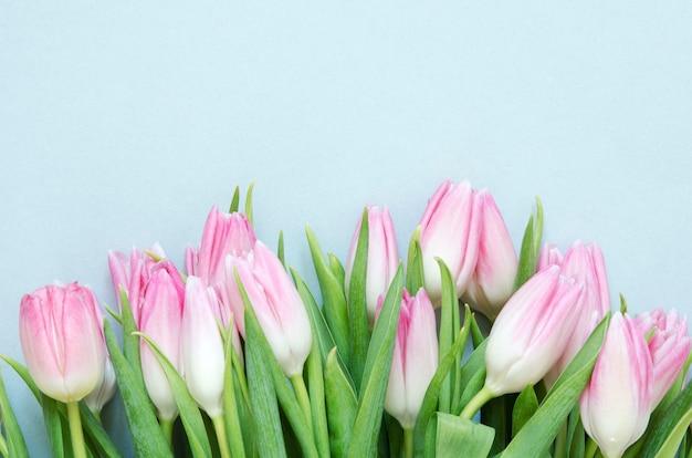 Blumenhintergrund mit tulpenblumen auf blauem hintergrund.