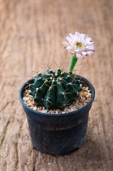 Blumenkaktus auf hölzernem hintergrund
