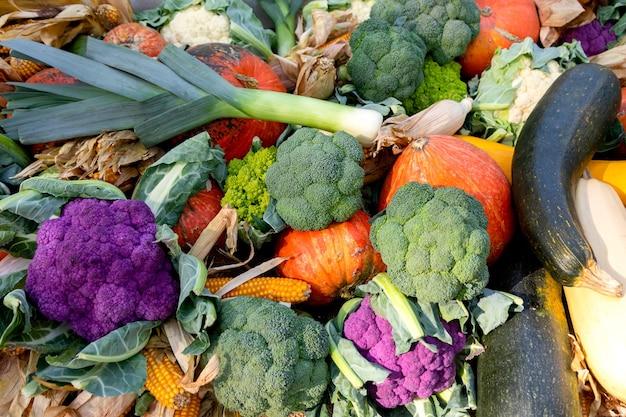 Blumenkohl, kürbisse, zucchini, mais, lauch und anderes gemüse auf der theke der landwirtschaftsmesse. konzept der landwirtschaft, ernte, thanksgiving. hintergrund zur landwirtschaft