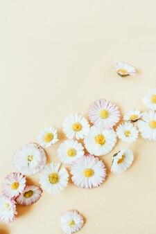 Blumenkomposition mit gänseblümchenkamille-blütenknospen auf pastellhintergrund.