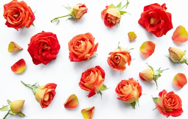 Blumenkomposition rahmen aus roten rosen und blättern auf weißem hintergrund