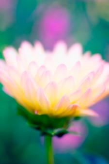 Blumenkopf, nahaufnahme