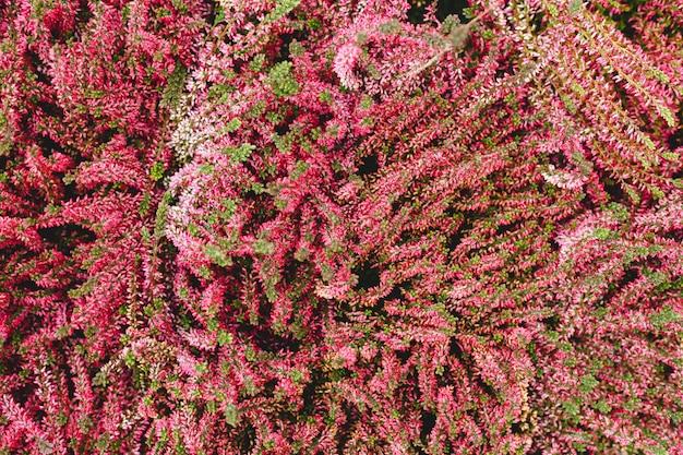 Blumenkulisse, hintergrund für den internationalen frauentag 8. märz, einladung oder valentinstag. rosa gemischte blumen. tropischer blumenhintergrund. hausgartenkonzept.