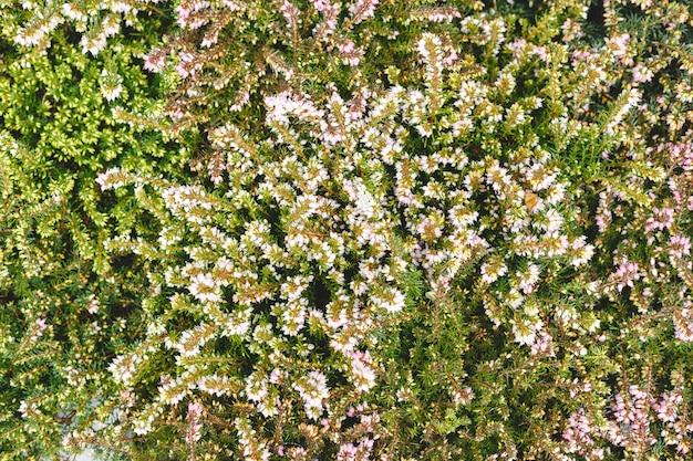 Blumenkulisse, hintergrund für den internationalen frauentag 8. märz, einladung oder valentinstag. weiße, grüne mischblumen. tropischer blumenhintergrund. hausgartenkonzept.