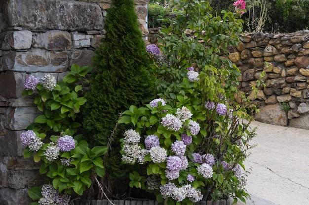 Blumenlandschaft in naturdörfern schwarzer architektur in der provinz guadalajara spanien