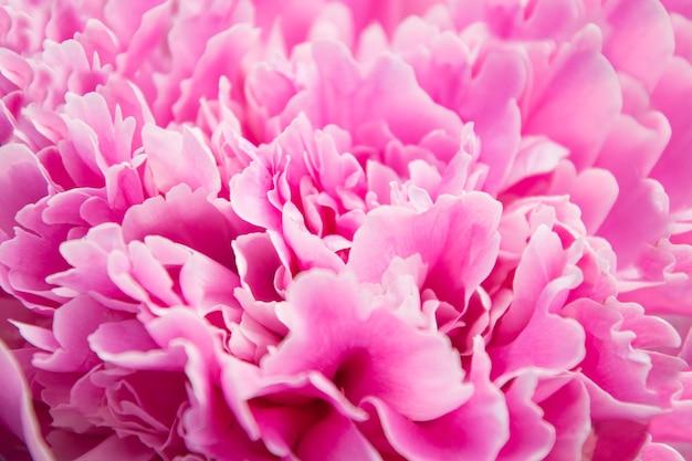 Blumenmuster aus rosa pfingstrosenblüten auf rosa