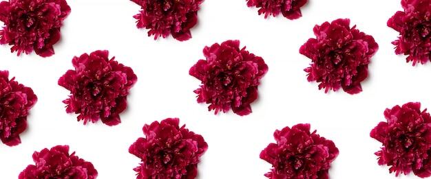 Blumenmuster der roten pfingstrose blüht auf weiß