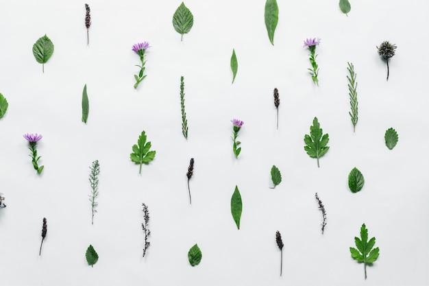 Blumenmuster gemacht von den grünen blättern, niederlassungen auf weißem hintergrund