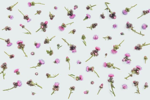 Blumenmuster gemacht von der distel mit den rosa und purpurroten blumen und den dornen auf weißem hintergrund