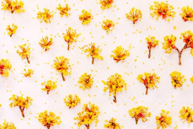 Blumenmuster mit gelb blüht kornelkirsche auf weiß. flachgelegt, draufsicht