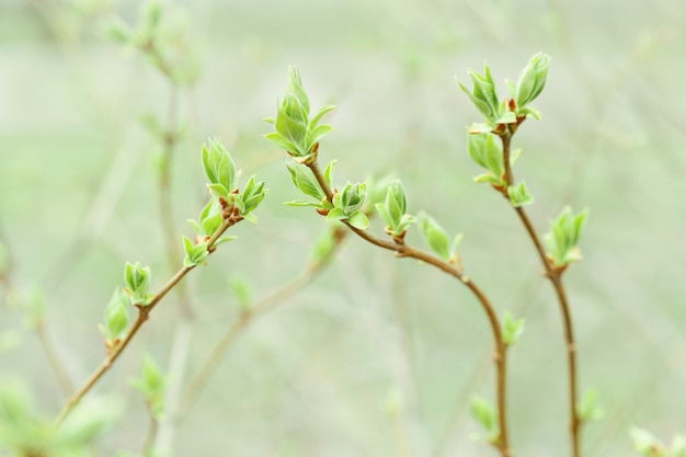 Blumenmuster von den neuen frühlingsniederlassungen mit neuen grünen blättern. tiefenschärfe.