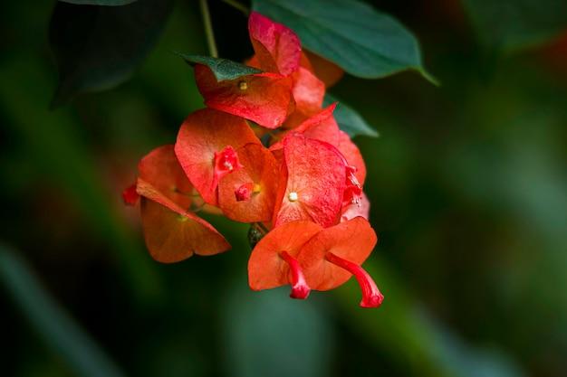 Blumennatur
