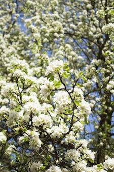 Blumenoberfläche. weiß blühende äste. lage vertikal. nahansicht.