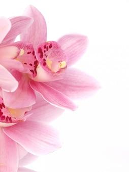 Blumenorchidee
