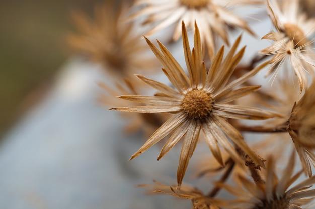 Blumenpflanze im garten in der natur