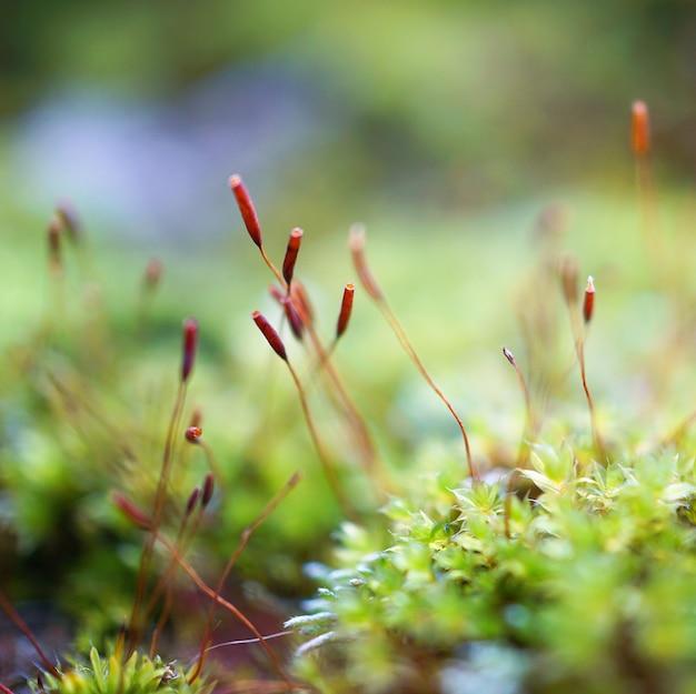 Blumenpflanze in der natur im garten
