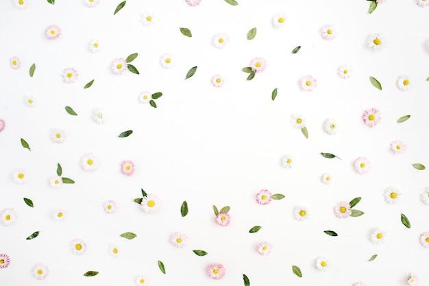 Blumenrahmen aus weißen und rosa kamillengänseblümchenblumen, grüne blätter auf weiß