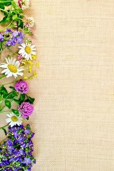Blumenrahmen kamille, klee, butterblumen auf entlassung