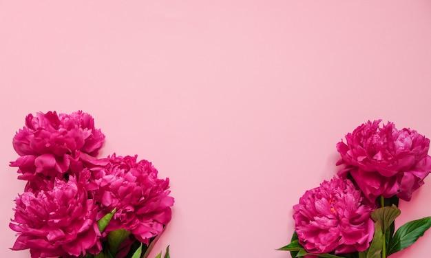 Blumenrahmen mit neuen niederlassungen der rosa pfingstrose auf pastellrosahintergrund mit kopienraum