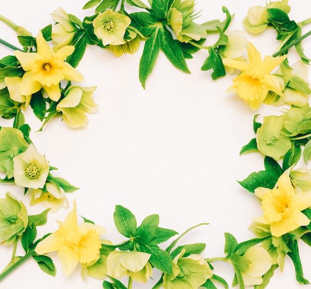 Blumenrahmen narzisse und nieswurz auf weiß