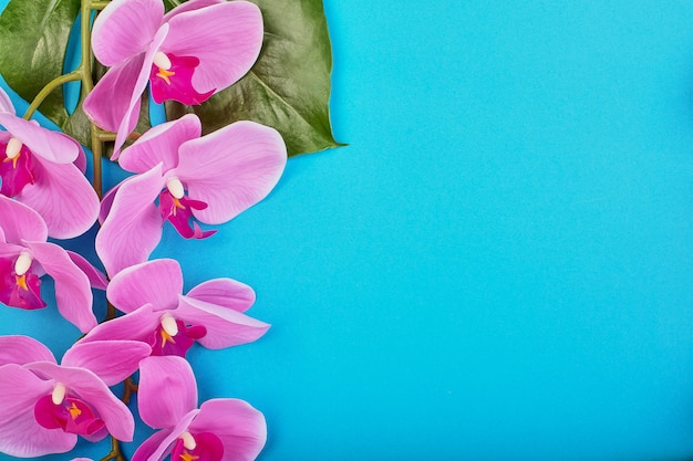 Blumenraum der tropischen rosa orchideen mit grünen tropischen blättern auf blauem raum. speicherplatz kopieren