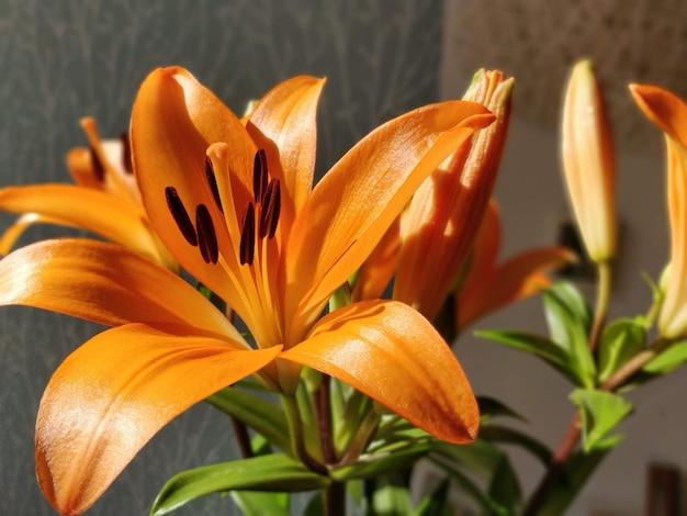 Blumenselektiver fokus, selektiver fokus auf motiv, hintergrundunschärfe, während der zeit natur genial schönes neues schönes foto