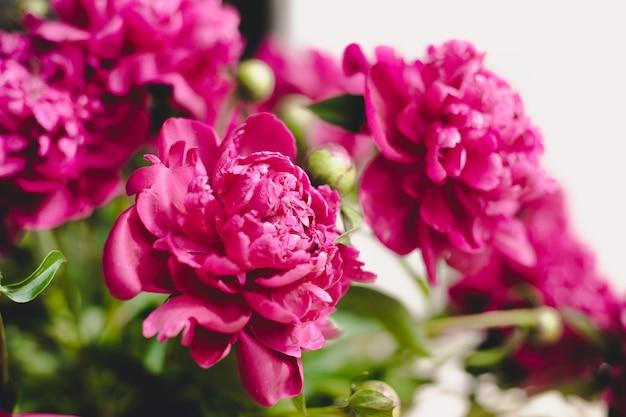 Blumenstrauß aus blühenden pfingstrosen. stillleben mit einem strauß pfingstrosen. zarte rosa pfingstrose