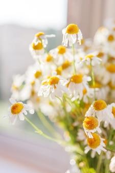 Blumenstrauß aus kamillen. gemütlicher sommermorgen zu hause.