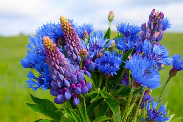 Blumenstrauß aus kornblumen und lupinen