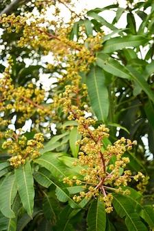 Blumenstrauß aus mango
