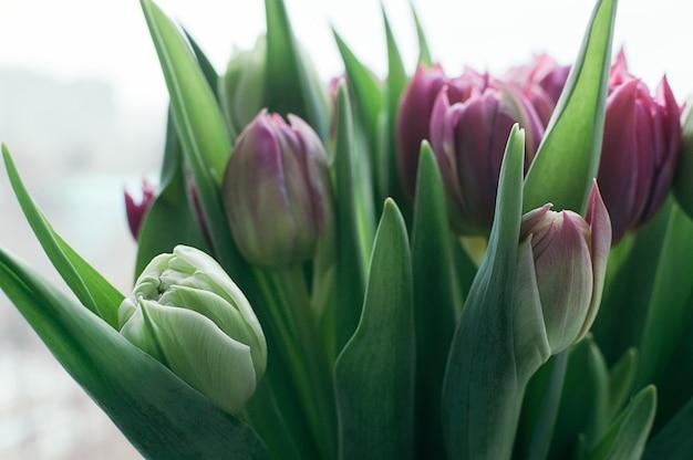 Blumenstrauß aus schönen rosa und grünen tulpenblumen frühlingsfeiertagstermin-ereigniskonzept