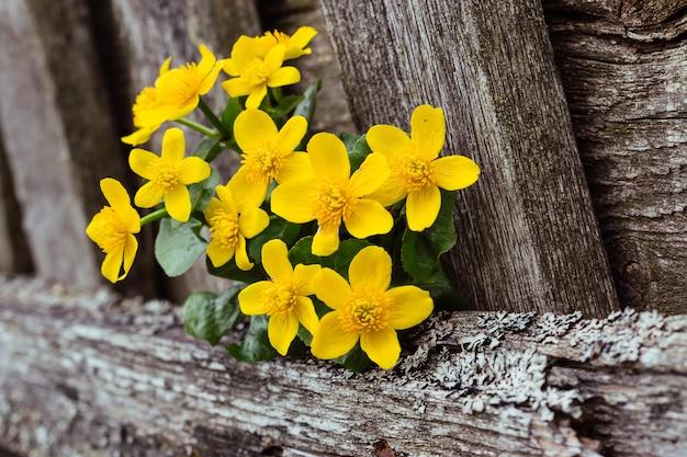 Blumenstrauß der frühlingsblumen schließen oben auf einem alten holzzaun. selektiver fokus mit geringer schärfentiefe