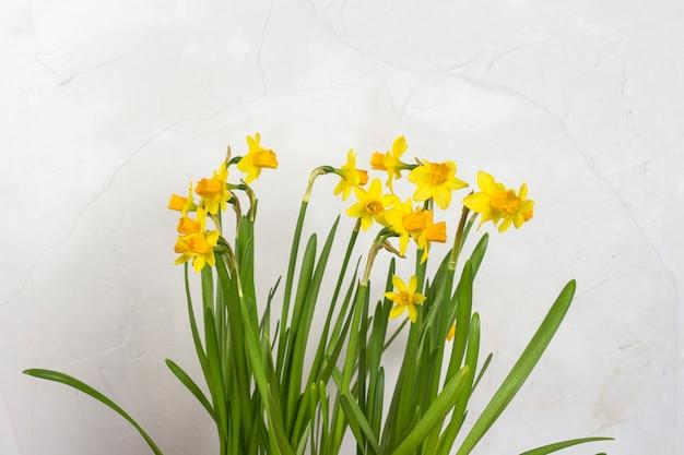 Blumenstrauß der gelben narzissen auf einem hintergrund der weißen steinmauer. konzept des urlaubs und des frühlingsanfangs.