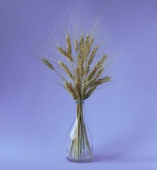Blumenstrauß der goldenen ährchen des weizens im vase mit körnern auf dem purpurroten hintergrund.