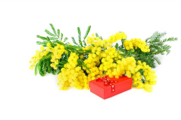 Blumenstrauß der goldenen mimose und der roten box auf der weißen hintergrund lokalisierten nahaufnahme